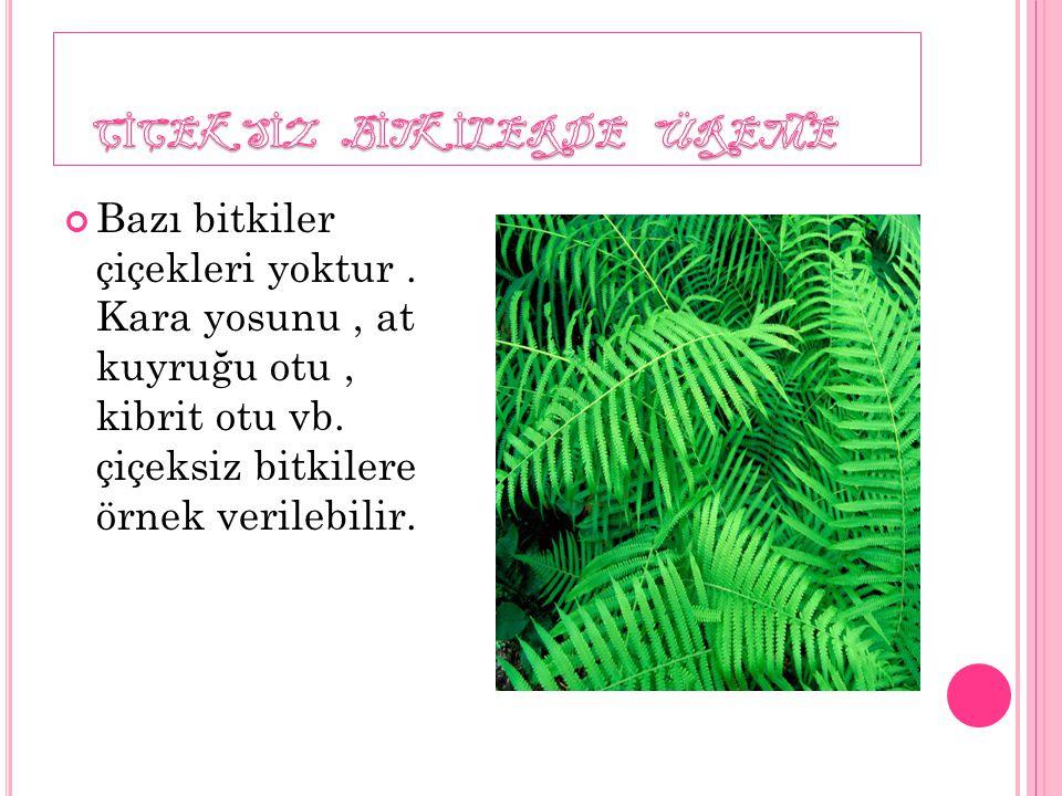 Bazı bitkiler çiçekleri yoktur. Kara yosunu, at kuyruğu otu, kibrit otu vb. çiçeksiz bitkilere örnek verilebilir.
