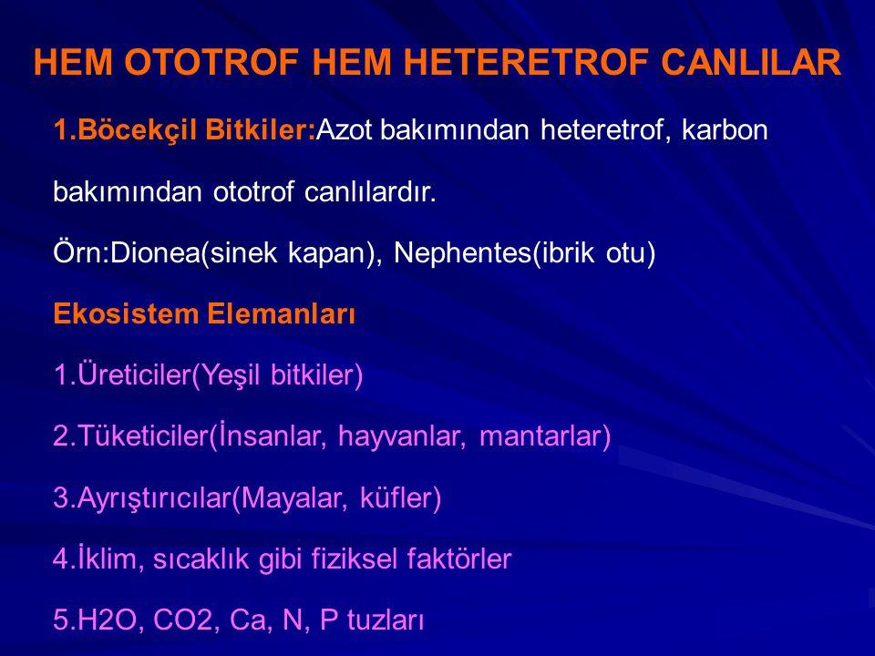 HEM OTOTROF HEM HETERETROF CANLILAR 1.Böcekçil Bitkiler:Azot bakımından heteretrof, karbon bakımından ototrof canlılardır.