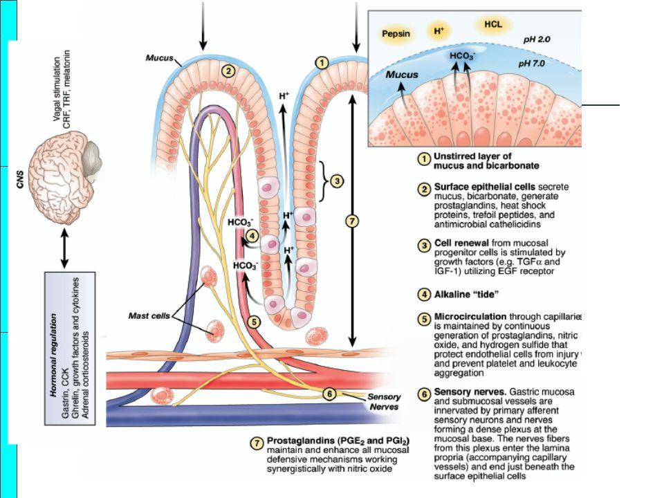 Kanamanın kontrolu ya da devamı oTrombosit agregasyonu için optimal pH 5,5-6 oPıhtının stabil kalması için pepsinojen aktif hale gelmemeli, pH >4.5 olmalı oMukozal iyileşme pH yüksekse daha iyi