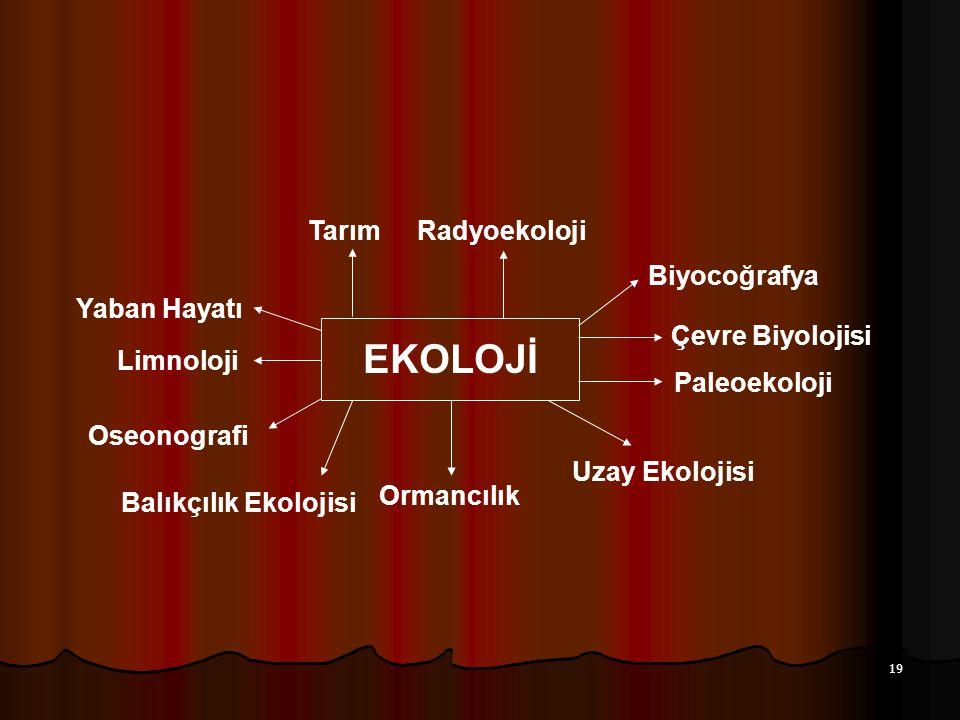 19 EKOLOJİ TarımRadyoekoloji Biyocoğrafya Çevre Biyolojisi Paleoekoloji Uzay Ekolojisi Ormancılık Balıkçılık Ekolojisi Oseonografi Limnoloji Yaban Hay