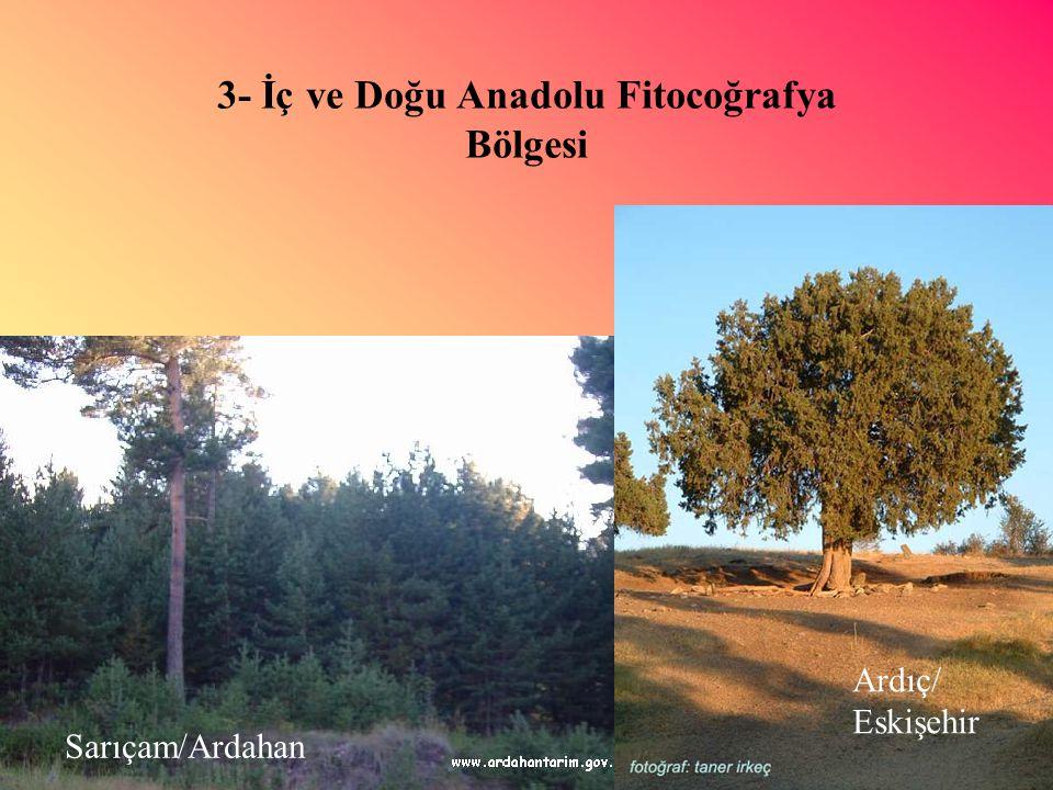 3- İç ve Doğu Anadolu Fitocoğrafya Bölgesi Ardıç/ Eskişehir Sarıçam/Ardahan