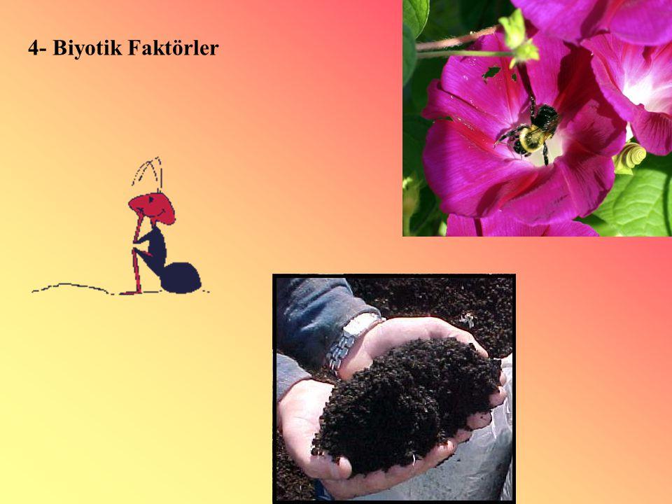 4- Biyotik Faktörler