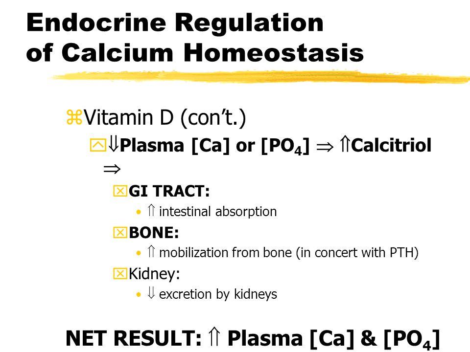 Endocrine Regulation of Calcium Homeostasis zVitamin D (con't.) y  Plasma [Ca] or [PO 4 ]   Calcitriol  xGI TRACT:  intestinal absorption xBONE:
