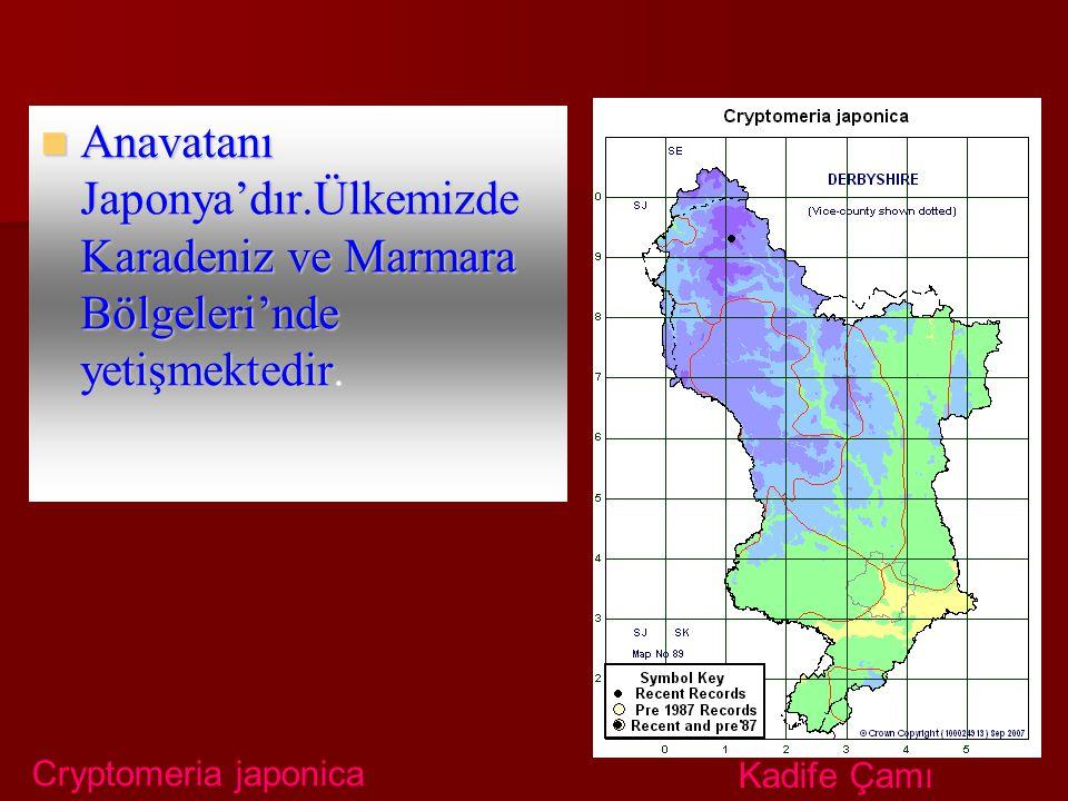 Anavatanı Japonya'dır.Ülkemizde Karadeniz ve Marmara Bölgeleri'nde yetişmektedir. Anavatanı Japonya'dır.Ülkemizde Karadeniz ve Marmara Bölgeleri'nde y
