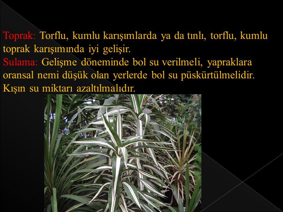 Saksı değişimi: Genç bitkilerde her yıl, yaşlı bitkilerde ise 2-3 yılda bir Nisan ayında yapılır.
