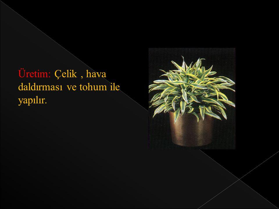 Üretim: Çelik, hava daldırması ve tohum ile yapılır.