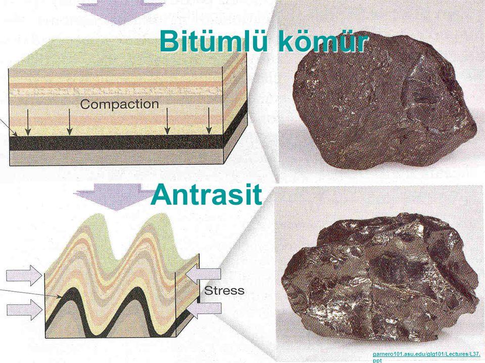Kömürleşme sürecindeki evreler: Mikrobiyal ve Biyokimyasal aşamalar biyokimyasal kömürleşme süreci olarak tanımlanmaktadır.
