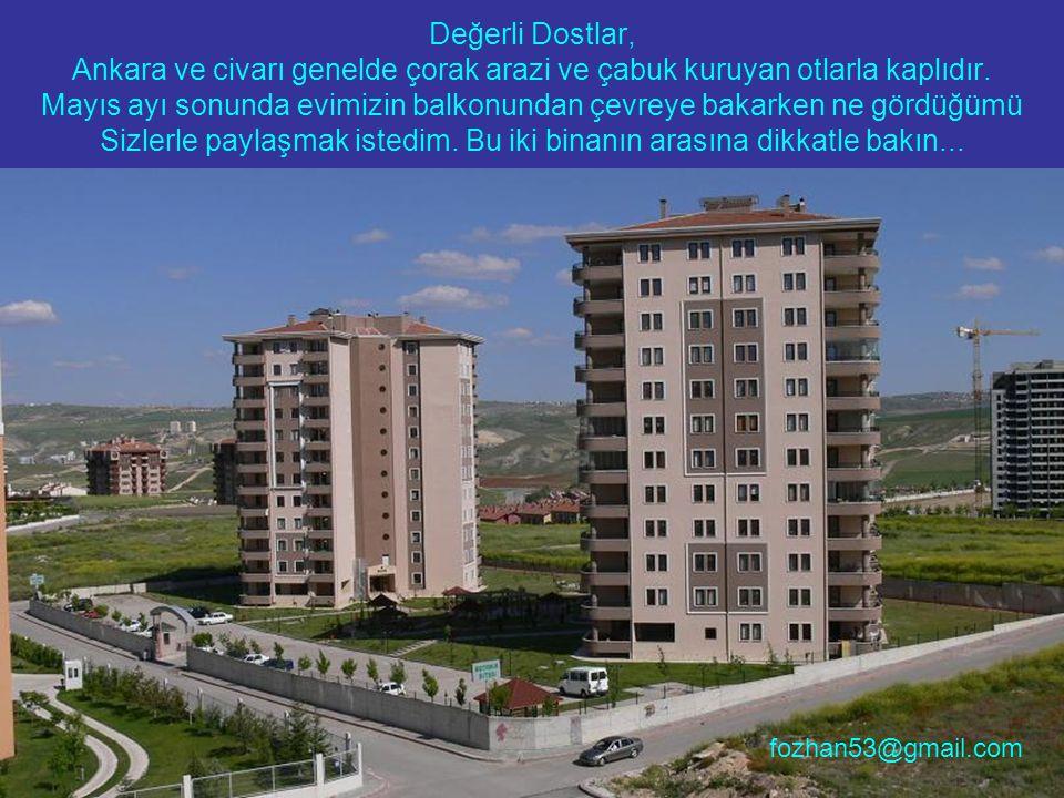 Değerli Dostlar, Ankara ve civarı genelde çorak arazi ve çabuk kuruyan otlarla kaplıdır.