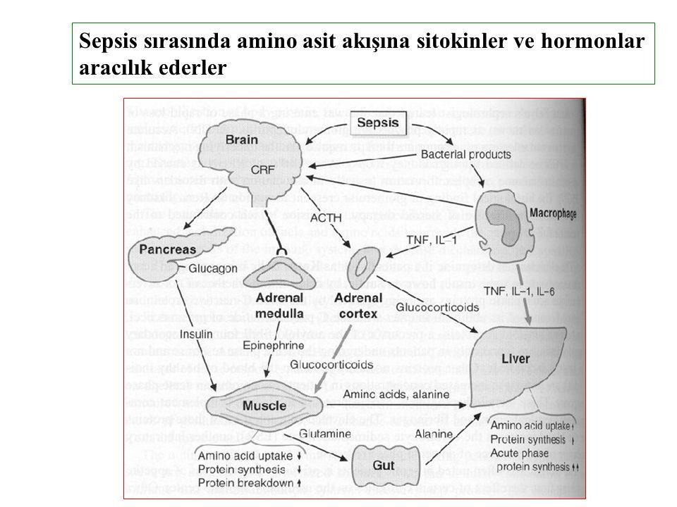 Sepsis sırasında amino asit akışına sitokinler ve hormonlar aracılık ederler