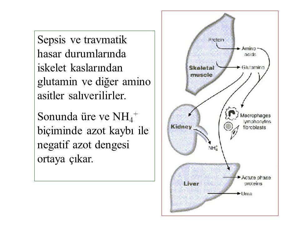 Sepsis ve travmatik hasar durumlarında iskelet kaslarından glutamin ve diğer amino asitler salıverilirler. Sonunda üre ve NH 4 + biçiminde azot kaybı