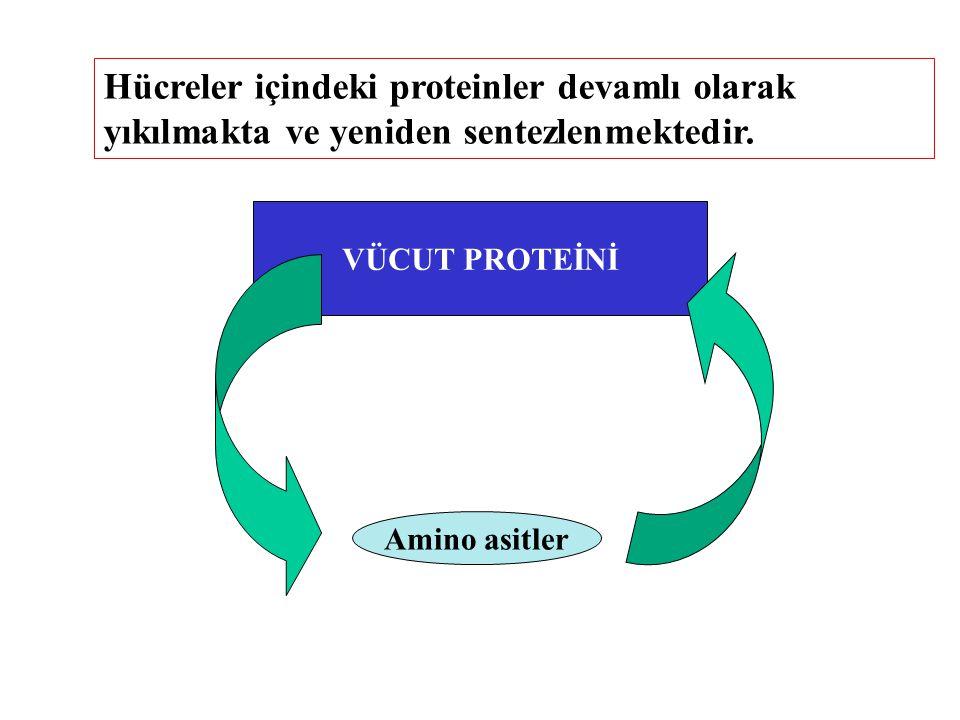 Hücreler içindeki proteinler devamlı olarak yıkılmakta ve yeniden sentezlenmektedir. VÜCUT PROTEİNİ Amino asitler