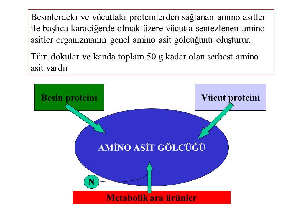 Besinlerdeki ve vücuttaki proteinlerden sağlanan amino asitler ile başlıca karaciğerde olmak üzere vücutta sentezlenen amino asitler organizmanın gene