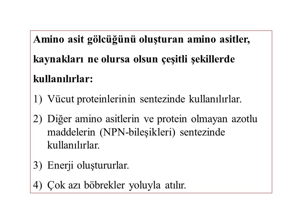 Amino asit gölcüğünü oluşturan amino asitler, kaynakları ne olursa olsun çeşitli şekillerde kullanılırlar: 1)Vücut proteinlerinin sentezinde kullanılı
