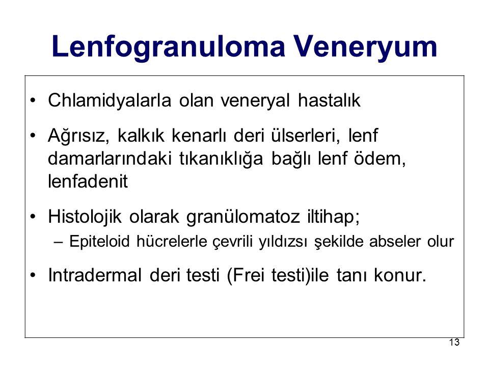 13 Lenfogranuloma Veneryum Chlamidyalarla olan veneryal hastalık Ağrısız, kalkık kenarlı deri ülserleri, lenf damarlarındaki tıkanıklığa bağlı lenf öd