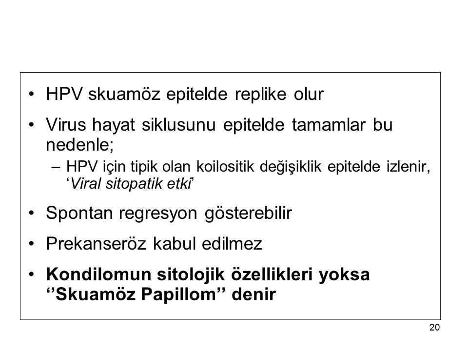 20 HPV skuamöz epitelde replike olur Virus hayat siklusunu epitelde tamamlar bu nedenle; –HPV için tipik olan koilositik değişiklik epitelde izlenir,