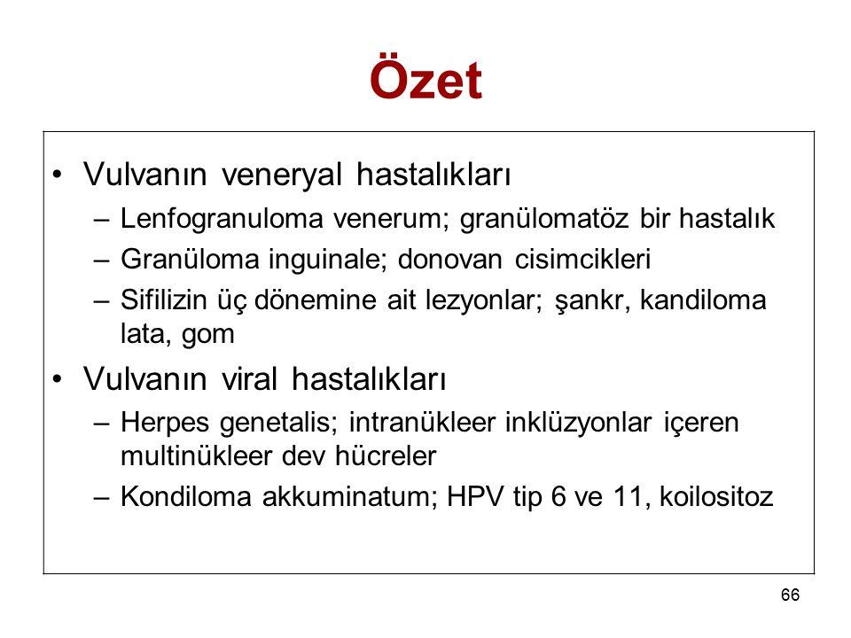 66 Özet Vulvanın veneryal hastalıkları –Lenfogranuloma venerum; granülomatöz bir hastalık –Granüloma inguinale; donovan cisimcikleri –Sifilizin üç dön