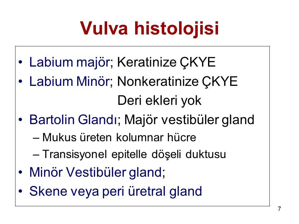 7 Vulva histolojisi Labium majör; Keratinize ÇKYE Labium Minör; Nonkeratinize ÇKYE Deri ekleri yok Bartolin Glandı; Majör vestibüler gland –Mukus üret