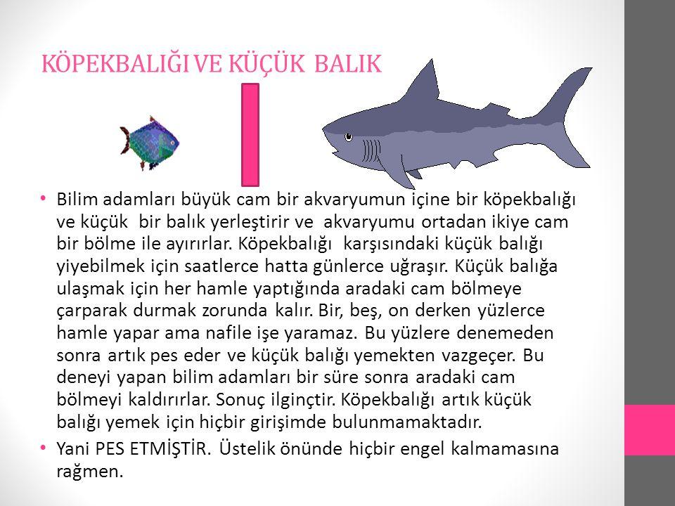 KÖPEKBALIĞI VE KÜÇÜK BALIK Bilim adamları büyük cam bir akvaryumun içine bir köpekbalığı ve küçük bir balık yerleştirir ve akvaryumu ortadan ikiye cam