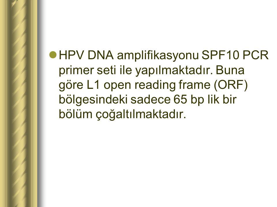 HPV DNA amplifikasyonu SPF10 PCR primer seti ile yapılmaktadır. Buna göre L1 open reading frame (ORF) bölgesindeki sadece 65 bp lik bir bölüm çoğaltıl