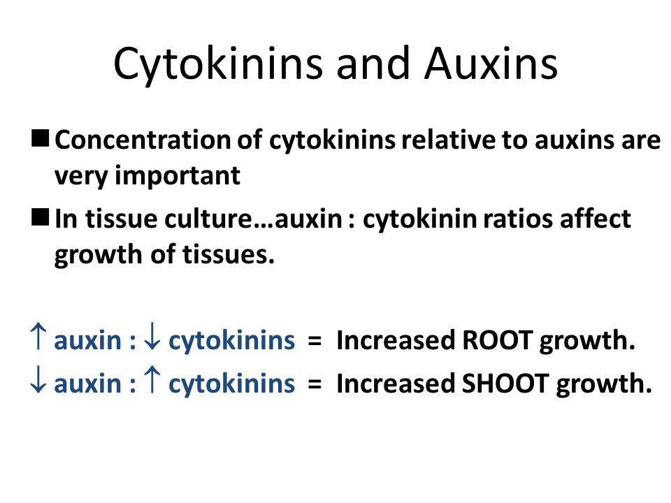Cytokinins and Auxins Concentration of cytokinins relative to auxins are very important In tissue culture…auxin : cytokinin ratios affect growth of ti