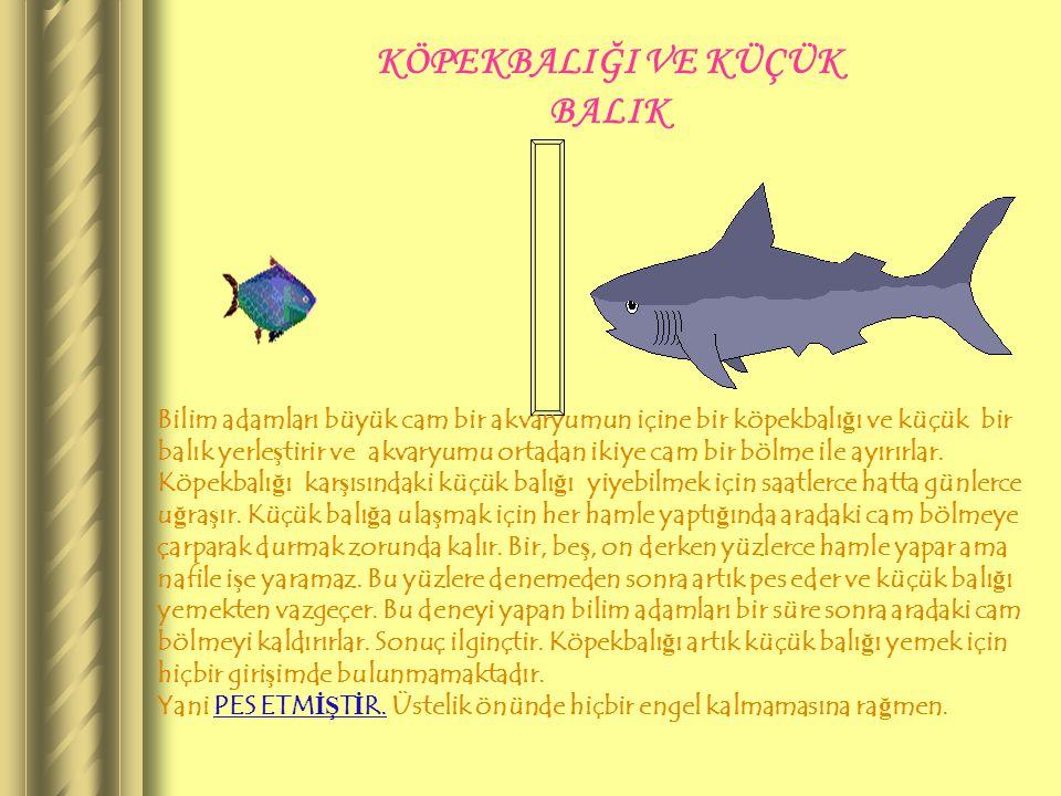 KÖPEKBALIĞI VE KÜÇÜK BALIK Bilim adamları büyük cam bir akvaryumun içine bir köpekbalı ğ ı ve küçük bir balık yerle ş tirir ve akvaryumu ortadan ikiye cam bir bölme ile ayırırlar.