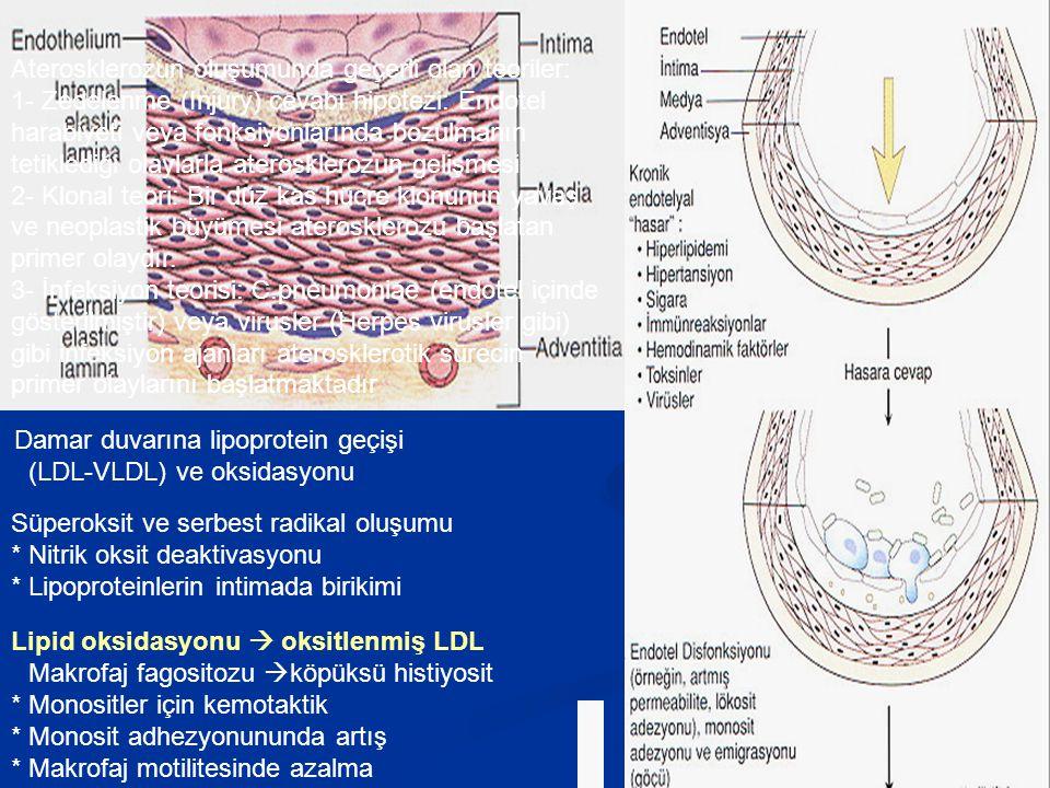 Damar duvarına lipoprotein geçişi (LDL-VLDL) ve oksidasyonu Süperoksit ve serbest radikal oluşumu * Nitrik oksit deaktivasyonu * Lipoproteinlerin inti