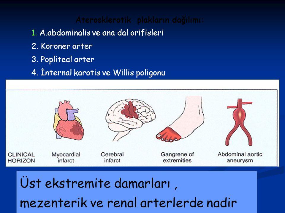 Aterosklerotik plakların dağılımı: 1. A.abdominalis ve ana dal orifisleri 2. Koroner arter 3. Popliteal arter 4. İnternal karotis ve Willis poligonu Ü