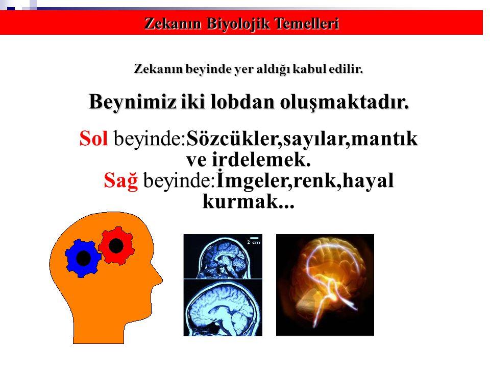 Zekanın Biyolojik Temelleri Zekanın beyinde yer aldığı kabul edilir. Beynimiz iki lobdan oluşmaktadır. Sol beyinde:Sözcükler,sayılar,mantık ve irdelem