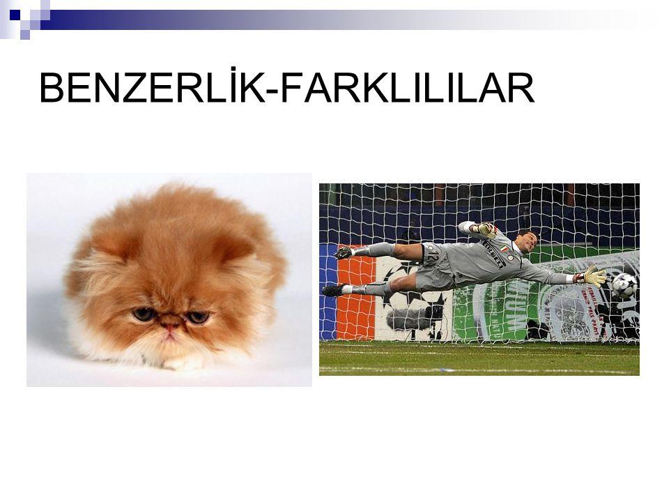 BENZERLİK-FARKLILILAR