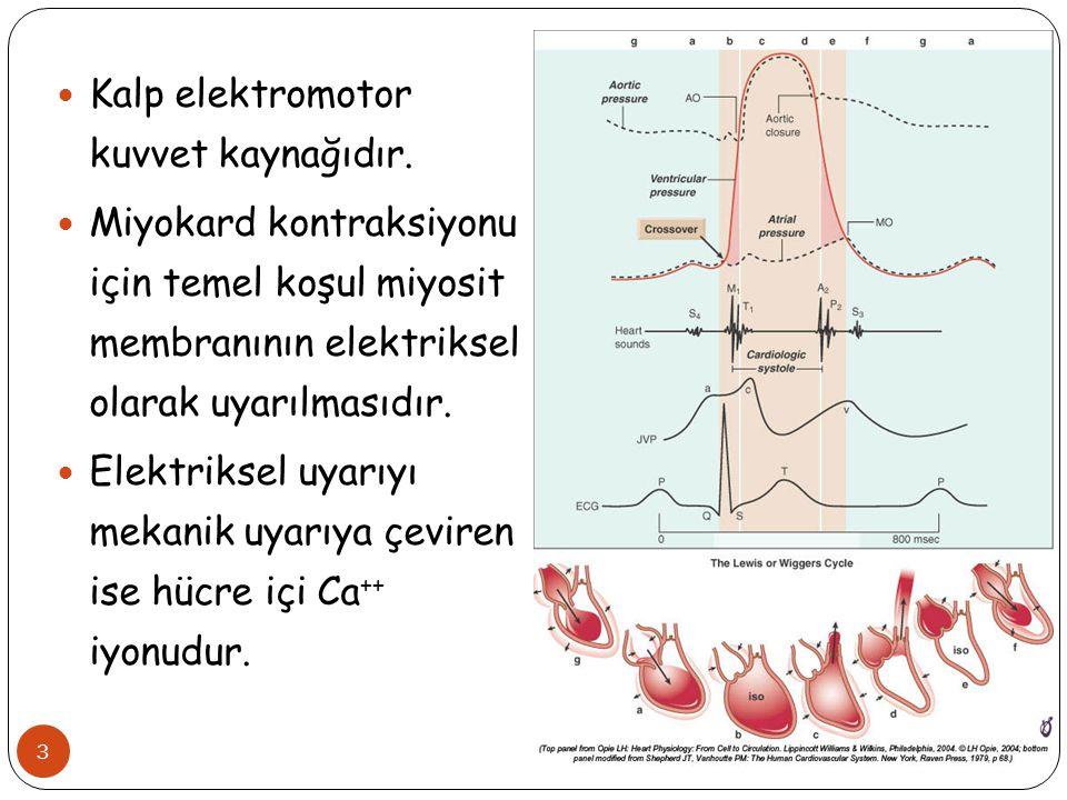 3 Kalp elektromotor kuvvet kaynağıdır. Miyokard kontraksiyonu için temel koşul miyosit membranının elektriksel olarak uyarılmasıdır. Elektriksel uyarı