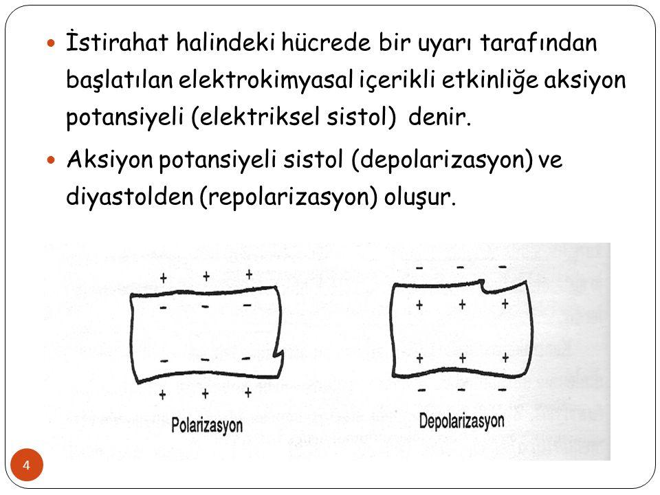 T Dalgası 45 Ventrikül repolarizasyonunu gösterir.