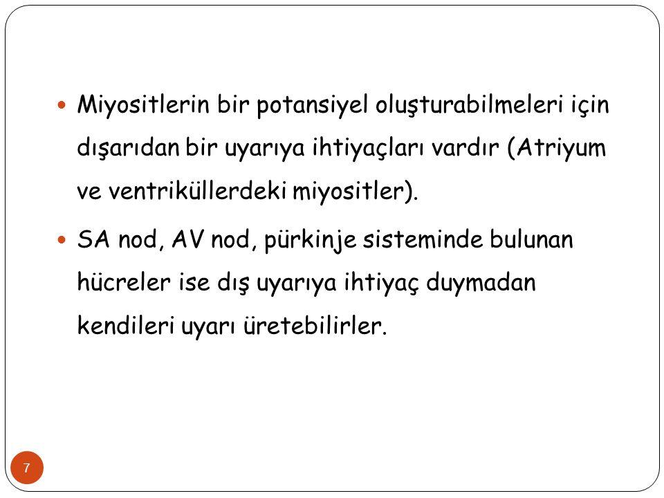 7 Miyositlerin bir potansiyel oluşturabilmeleri için dışarıdan bir uyarıya ihtiyaçları vardır (Atriyum ve ventriküllerdeki miyositler). SA nod, AV nod