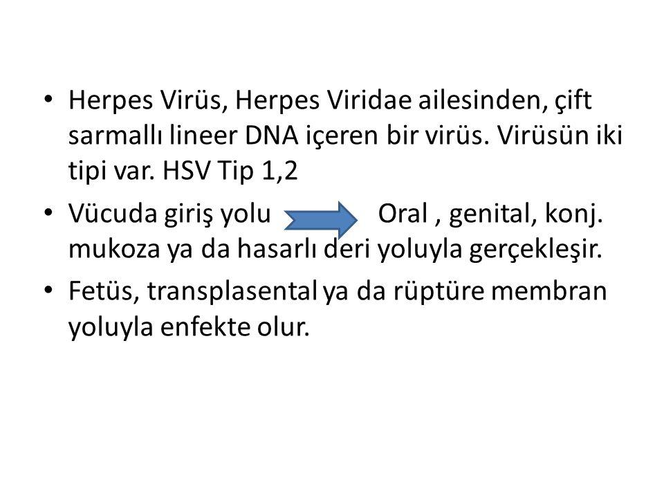 Herpes Virüs, Herpes Viridae ailesinden, çift sarmallı lineer DNA içeren bir virüs. Virüsün iki tipi var. HSV Tip 1,2 Vücuda giriş yolu Oral, genital,