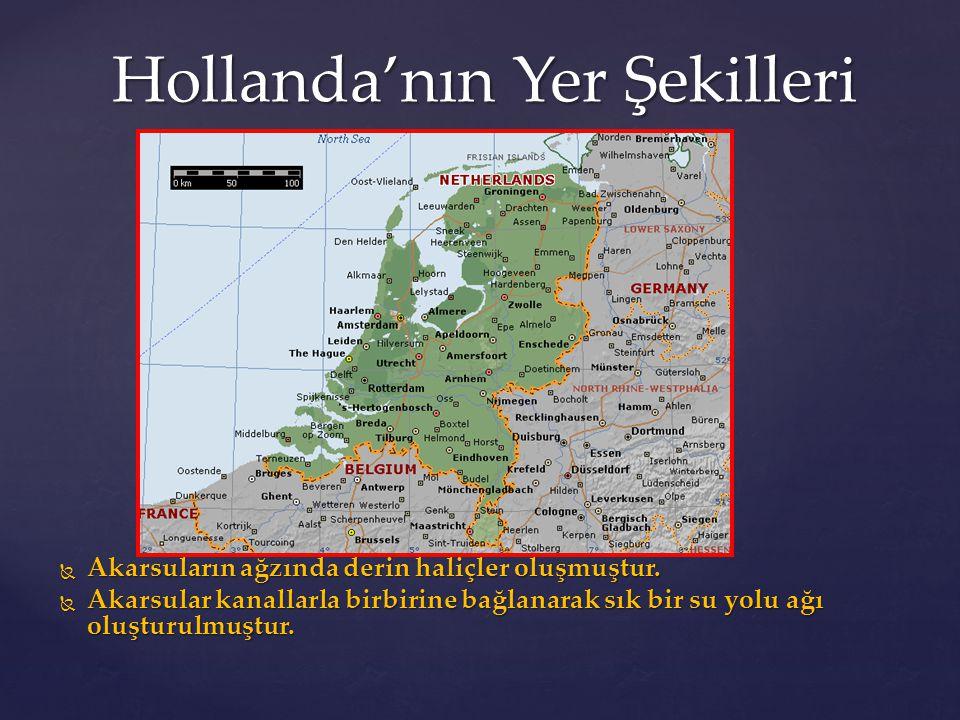 Hollanda'nın Yer Şekilleri  Akarsuların ağzında derin haliçler oluşmuştur.  Akarsular kanallarla birbirine bağlanarak sık bir su yolu ağı oluşturulm