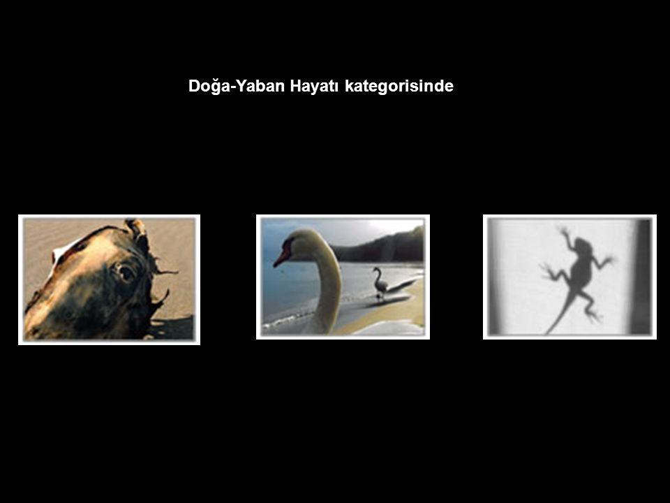 Bu sonuçlara göre: İnsan kategorisinde birincisi Erdal Kınacı, İkincisi Özer Kanburoğlu, Üçüncüsü Ercan Aydeniz oldu. Doğa-Yaban Hayatı kategorisinde
