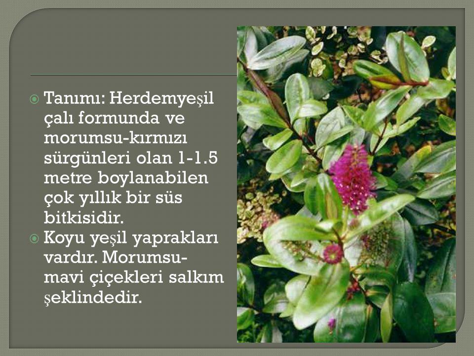  Tanımı: Herdemye ş il çalı formunda ve morumsu-kırmızı sürgünleri olan 1-1.5 metre boylanabilen çok yıllık bir süs bitkisidir.  Koyu ye ş il yaprak