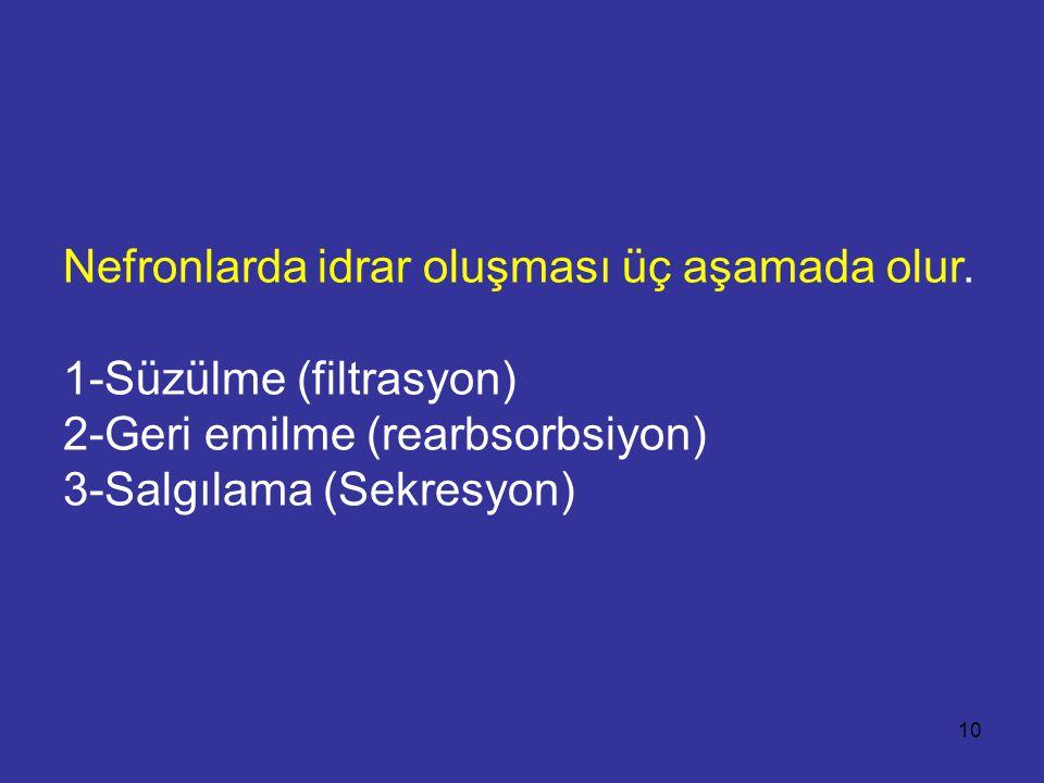 Nefronlarda idrar oluşması üç aşamada olur. 1-Süzülme (filtrasyon) 2-Geri emilme (rearbsorbsiyon) 3-Salgılama (Sekresyon) 10