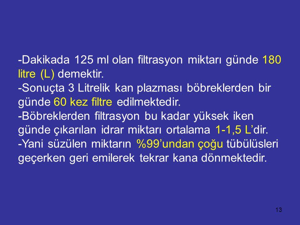 -Dakikada 125 ml olan filtrasyon miktarı günde 180 litre (L) demektir. -Sonuçta 3 Litrelik kan plazması böbreklerden bir günde 60 kez filtre edilmekte