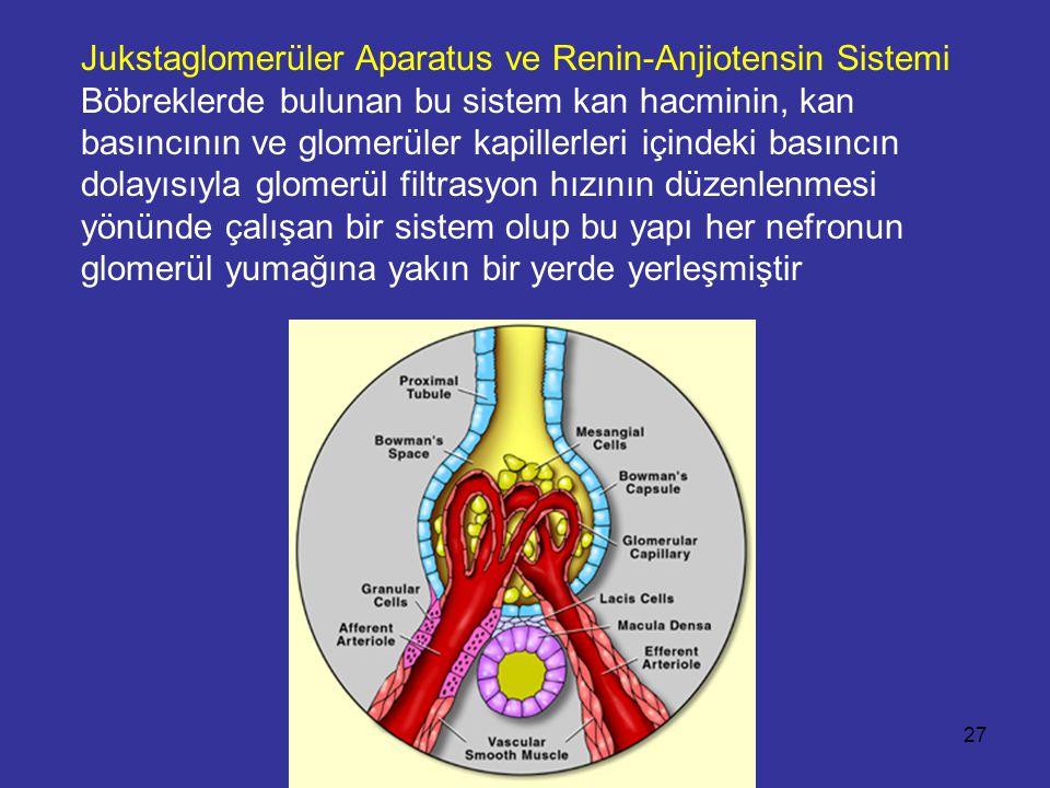 Jukstaglomerüler Aparatus ve Renin-Anjiotensin Sistemi Böbreklerde bulunan bu sistem kan hacminin, kan basıncının ve glomerüler kapillerleri içindeki