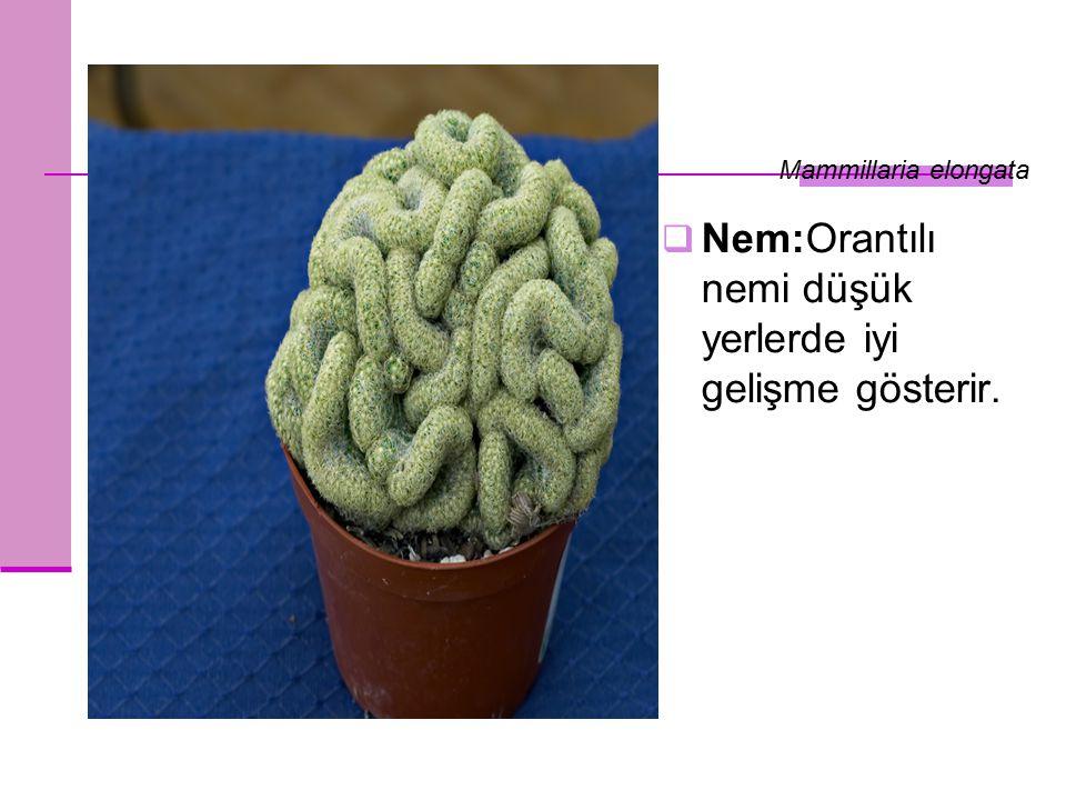 Nem:Orantılı nemi düşük yerlerde iyi gelişme gösterir. Mammillaria elongata