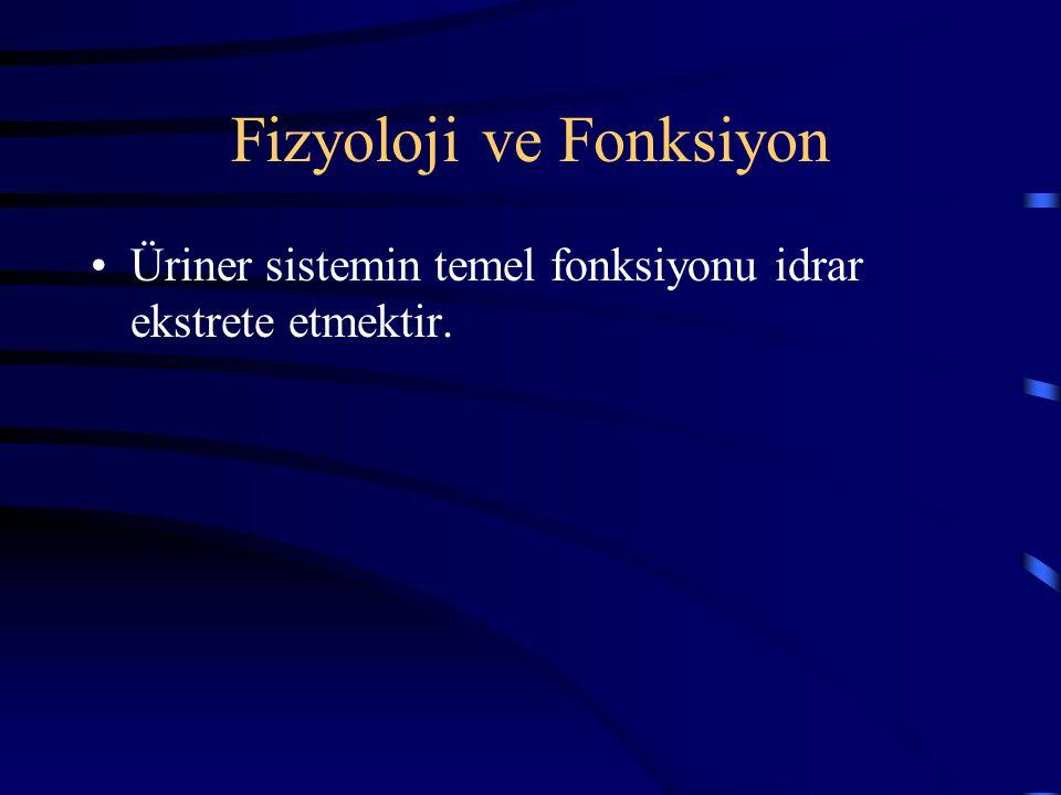 Fizyoloji ve Fonksiyon Üriner sistemin temel fonksiyonu idrar ekstrete etmektir.