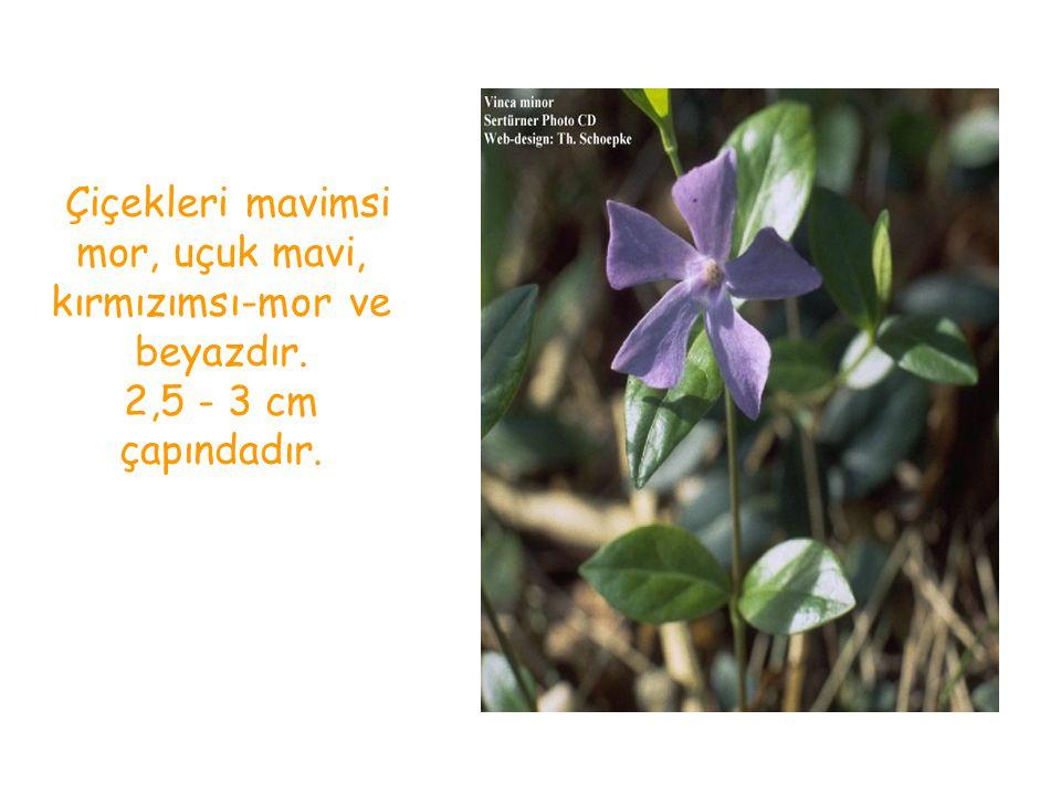 Çiçekleri mavimsi mor, uçuk mavi, kırmızımsı-mor ve beyazdır. 2,5 - 3 cm çapındadır.
