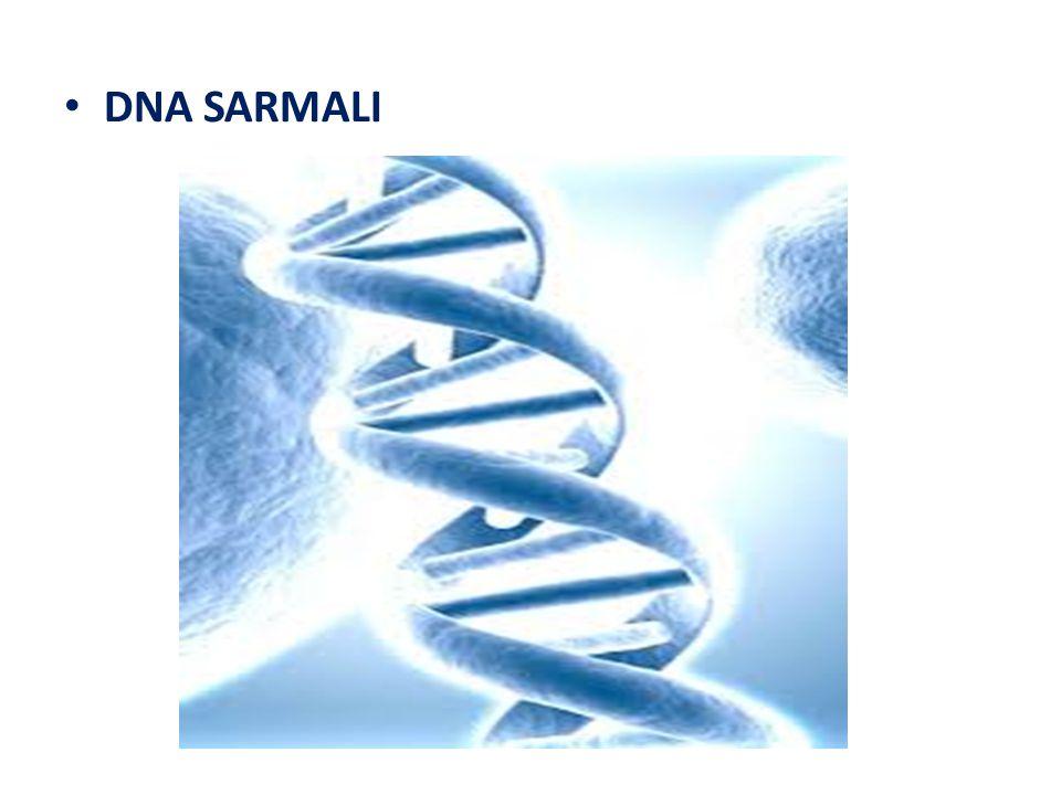 DNA SARMALI