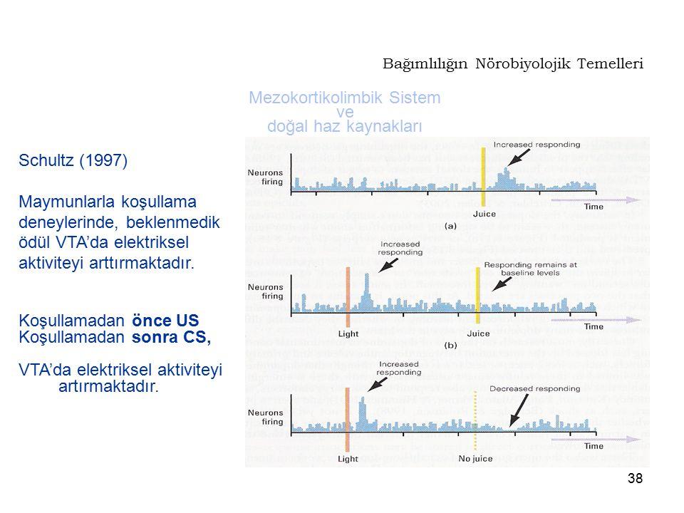38 Bağımlılığın Nörobiyolojik Temelleri Mezokortikolimbik Sistem ve doğal haz kaynakları Schultz (1997) Maymunlarla koşullama deneylerinde, beklenmedi