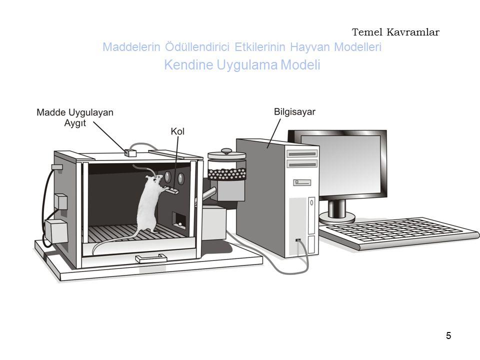 5 Temel Kavramlar Maddelerin Ödüllendirici Etkilerinin Hayvan Modelleri Kendine Uygulama Modeli
