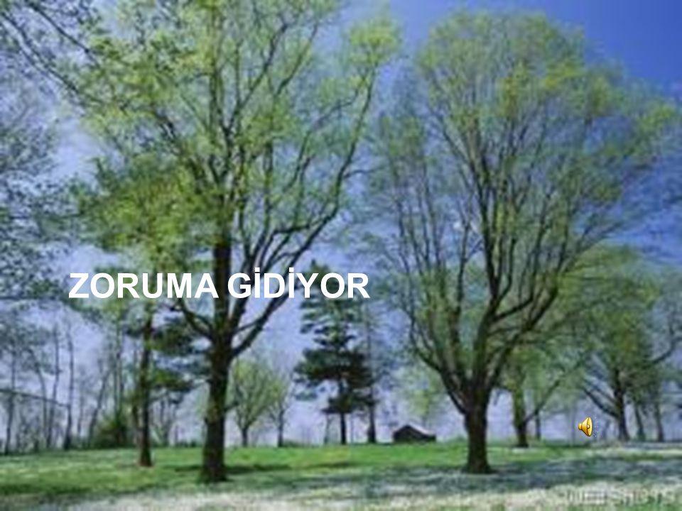 ZORUMA GİDİYOR