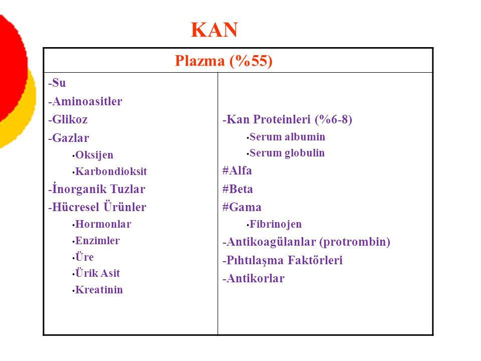 Plazma (%55) -Su -Aminoasitler -Glikoz -Gazlar Oksijen Karbondioksit -İnorganik Tuzlar -Hücresel Ürünler Hormonlar Enzimler Üre Ürik Asit Kreatinin -Kan Proteinleri (%6-8) Serum albumin Serum globulin #Alfa #Beta #Gama Fibrinojen -Antikoagülanlar (protrombin) -Pıhtılaşma Faktörleri -Antikorlar KAN