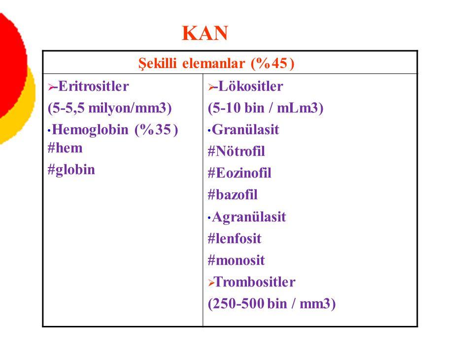 Şekilli elemanlar (%45 )  -Eritrositler (5-5,5 milyon/mm3) Hemoglobin (%35 ) #hem #globin  -Lökositler (5-10 bin / mLm3) Granülasit #Nötrofil #Eozin
