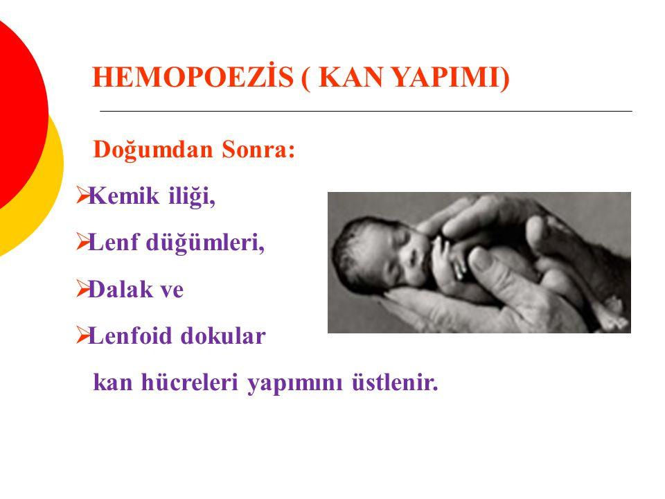 Doğumdan Sonra:  Kemik iliği,  Lenf düğümleri,  Dalak ve  Lenfoid dokular kan hücreleri yapımını üstlenir. HEMOPOEZİS ( KAN YAPIMI)