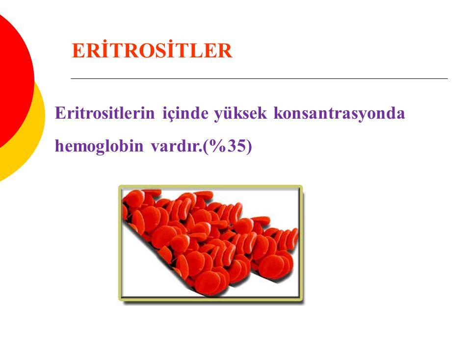 ERİTROSİTLER Eritrositlerin içinde yüksek konsantrasyonda hemoglobin vardır.(%35)